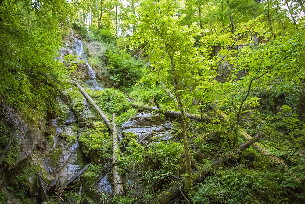 Seisenbergklamm Weissbach Urwald