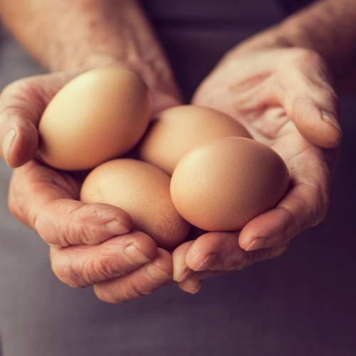 Henasteign - Bio-Eier im Hofladen