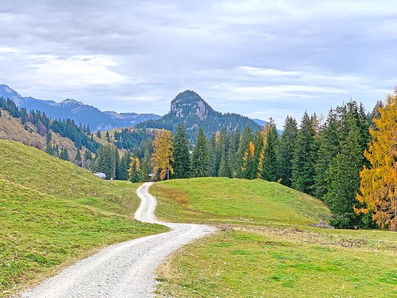 Forstweg - Loferer Alm